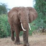 Samburu has the best elephants so friendly and entertaining