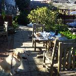 My Labrador enjoying our breakfast in the sun at the back