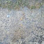 Marrinade de mégots à l'entrée de la piscine