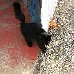 Amity Vineyards kitty, very friendly