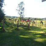 Neshobe River Winery Foto