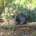 ancora un gatto nella campagna circostante..