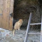 il gatto nel fienile...