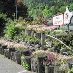Garden view of Alpine motel