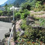Garden of Alpine motel