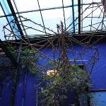 El Cenote Azul Hostel Foto