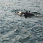 Dolphins from the Seablaster
