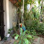 The most colorful parrot (in the first courtyard)