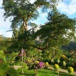 Part of large garden