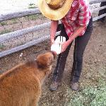 Feeding a baby bison rescued from the coyotes