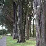 Plas Newydd trees