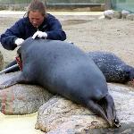 Untersuchung der Tiere