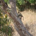 Baby Monkey of some sort, Cottars Safari