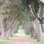 La Colombe grounds