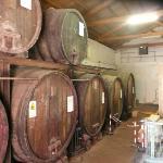 Cave viticole
