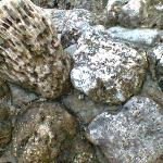 Close up of rocks you can expect to step on. These ones were mixed with cement to form a low bar