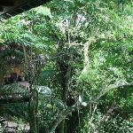 Versteckt zwischen Bäumen