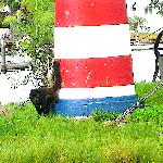 LIGHTHOUSE w. 2 monkeys