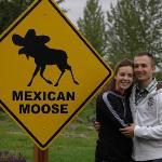 Mexican Moose