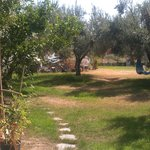 Figs & Olive trees on the grounds