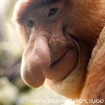 Monkey Tops Safari