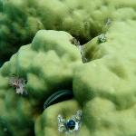 Xmas tree worms off Moyyan beach