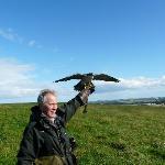 brian with a harris hawk