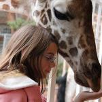 Up close & personal giraffe encounters at breakfast & early evening