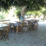 The tree of Omonoia