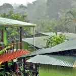 rainforest rain
