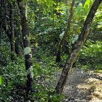 sendero or path