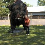 Big buffalo statuary