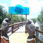 Beautiful carvings at manatee point