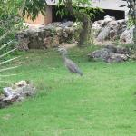 a nice bird walk in the pineapple beach garden