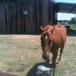 meet and greet with one of the horses