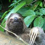 Sloth - One of the many exotic animals in Costa Rica