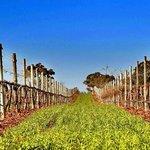 Warrabilla Wines Foto