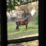 horse corral outsidethe window of room 27 & 28