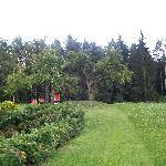 il giardino sul retro