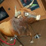 One of the Bulls who ran in the festival. He gored a festival goer...