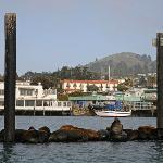 View diverse marine wildlife from aboard Minerva