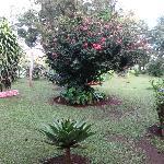 garden in the back
