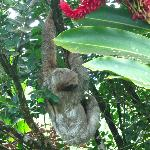 a sloth near the grounds entrance