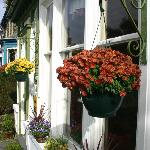 Colourful hanging baskets