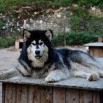 Sawyer, l'un des chiens de Vanessa