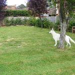 Our dog enjoying the garden early morning