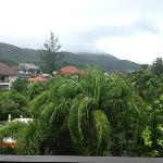 view from tropical premium