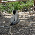 I meravigliosi animali del Kenya