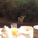 breakfast's guest ...