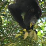 monkey lunch